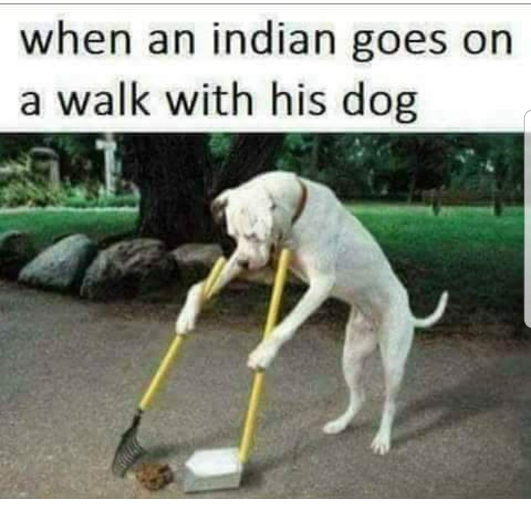 Image result for when dogs walk indians