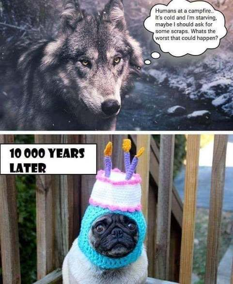Image result for wolf pug meme